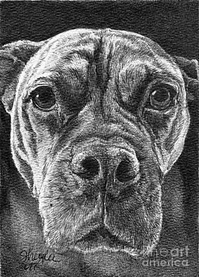 Pitbull Drawing - Roxy by Faithful Faces Pet Portraits