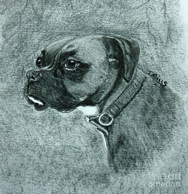 Drawing - Roxy by Terri Mills