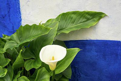 Photograph - Royal Blue Garden Contrast by Georgia Mizuleva