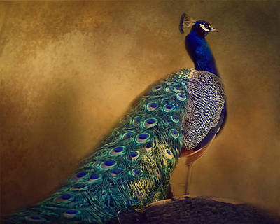 Photograph - Royal Blue Peacock by TnBackroadsPhotos
