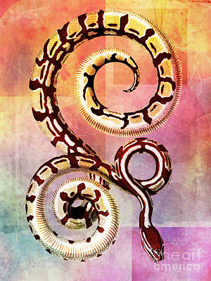 Boa Constrictor Mixed Media - Royal Boa by Tammera Malicki-Wong