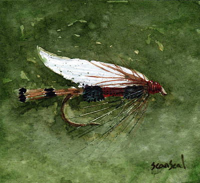 Royal Coachman Wet Fly Art Print by Sean Seal