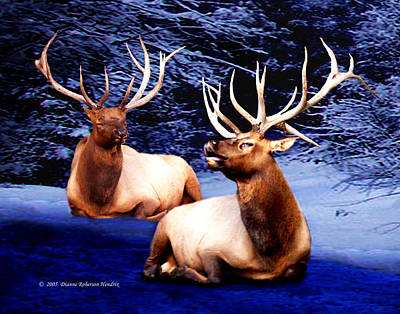 Royal Elk Art Print by Dianne Roberson