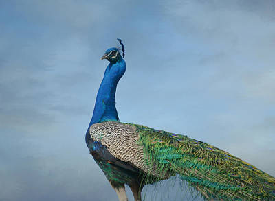 Photograph - Royal Fowl 19 by Fraida Gutovich
