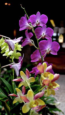 Photograph - Royal Hawaiian Orchids by Michele Myers