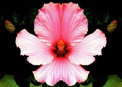 Digital Art - Royal Hibiscus by Max DeBeeson