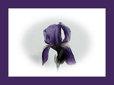 Wrap Digital Art - Royal Iris by Marsha Heiken