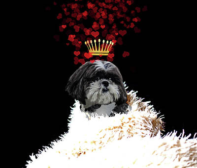 Shih Tzu Painting - Royal Love Pup, Shi Tzu, Crown Of Hearts by Tina Lavoie