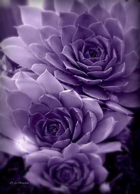 Photograph - Royal Luminous Menagerie by Jeanette C Landstrom