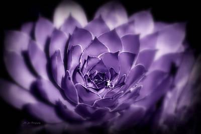 Photograph - Royal Luminous Succulent by Jeanette C Landstrom