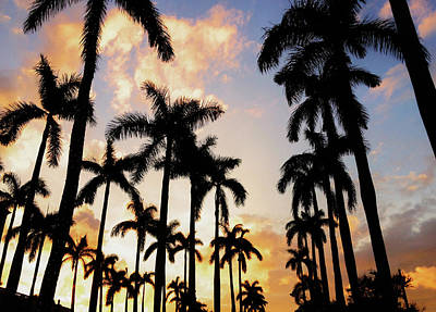 Photograph - Royal Palm Way by Josy Cue