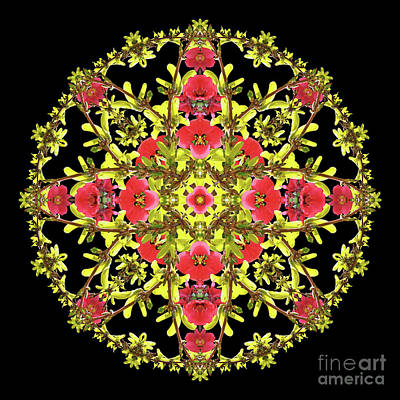 Wall Art - Photograph - Royal Quinsythia Mandala by Karen Jordan Allen