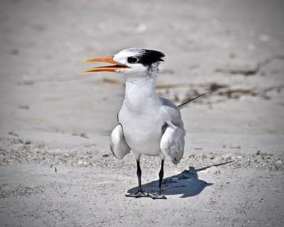 Photograph - Royal Tern by Carol Bradley
