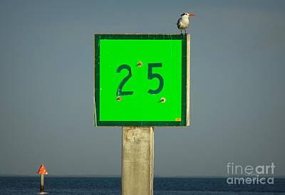 Photograph - Royal Tern Turning Sideways by Lainie Wrightson