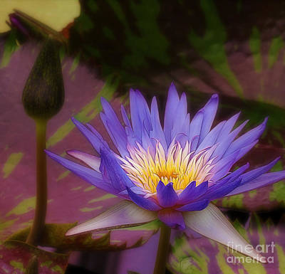 Photograph - Royal Water Lily by Judi Bagwell