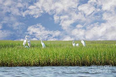 Photograph - Rsvp Egrets Only by Benanne Stiens