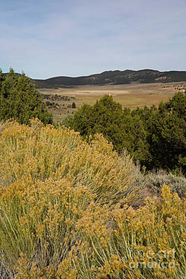 Photograph - Rt 72 Utah by Cindy Murphy - NightVisions