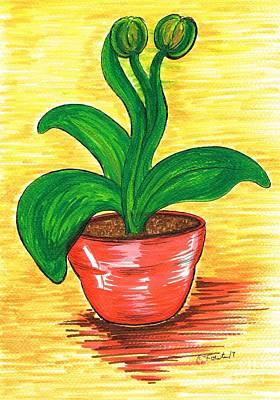Drawing - Rubber Plant by Teresa White