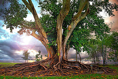 Rubber Tree Art Print