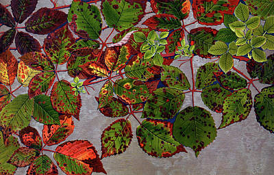 Rose Branch Painting - Rubus Fruticosus by Philippe Robert
