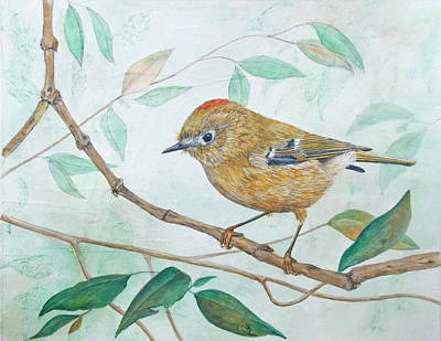 Painting - Ruby-crowned Kinglet by Sandy Clift