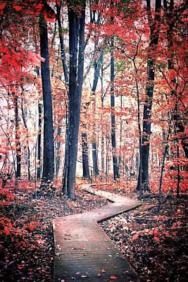 Photograph - Ruby Forest by Shawna Rowe