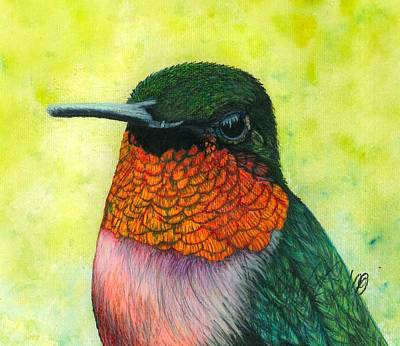 Iridescent Drawing - Ruby-throated Hummingbird by Jennifer Campbell Brewer