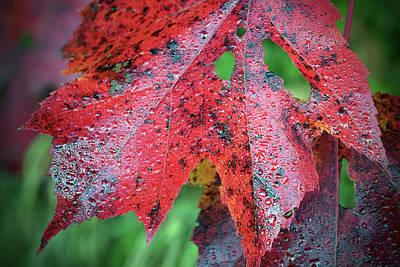 Digital Art - Ruby Leaf by Patrick Groleau