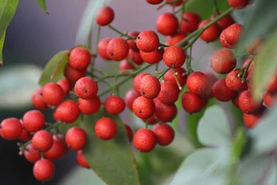 Ruby Red Berries Art Print