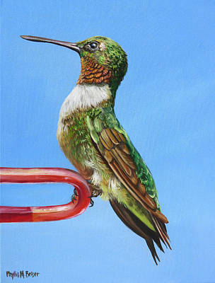 Painting - Ruby Throat Hummingbird  by Phyllis Beiser