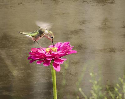 Ruby Throated Hummingbird 12-2015 Art Print by Thomas Young