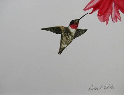 Ruby Throated Hummingbird Original by Amanda Burek