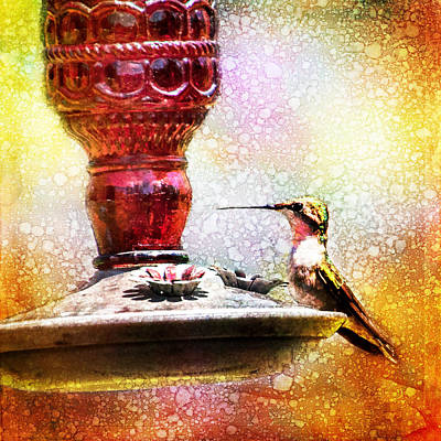 Photograph - Ruby Throated Hummingbird At Feeder Art by Christina VanGinkel