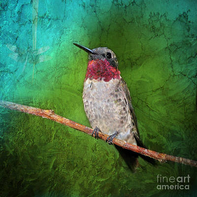 Ruby Throated Hummingbird Art Print by Betty LaRue