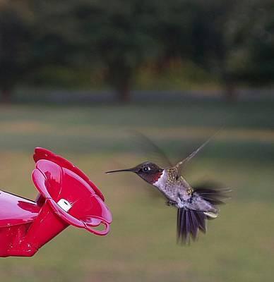 Photograph - Ruby-throated Hummingbird by Brett Winn