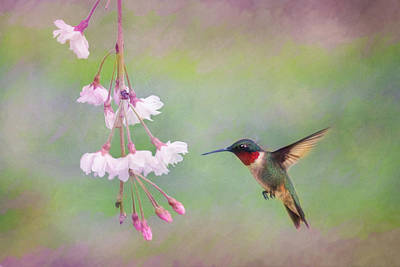 Ruby-throated Hummingbird Art Print by Lori Deiter