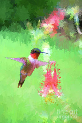 Roaring Red - Ruby-throated Hummingbird  painter paintography by Dan Friend