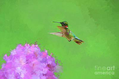 Photograph - Ruby-throated Hummingbird  Paintography Picture by Dan Friend