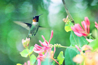Digital Art - Ruby-throated Hummingbird by Trina  Ansel