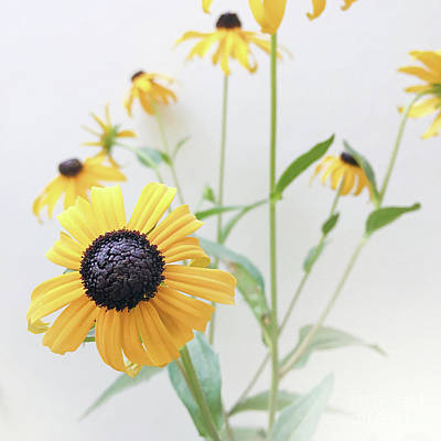 Art Print featuring the photograph Rudbeckia 1 by Cindy Garber Iverson