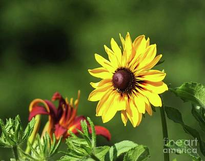 Photograph - Rudbeckia And Lily by Lizi Beard-Ward