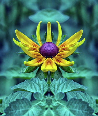 Photograph - Rudbeckia  Flower Pareidolia by Constantine Gregory