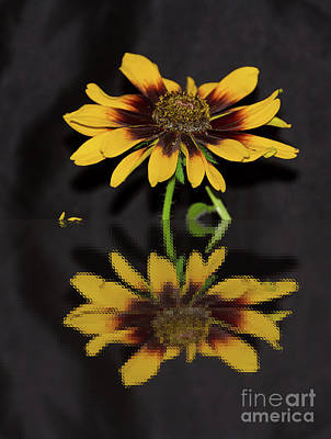 Photograph - Rudbeckia Reflection by Donna Brown