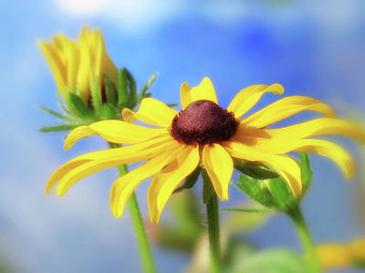 Photograph - Rudbeckia Summer Dream by MTBobbins Photography