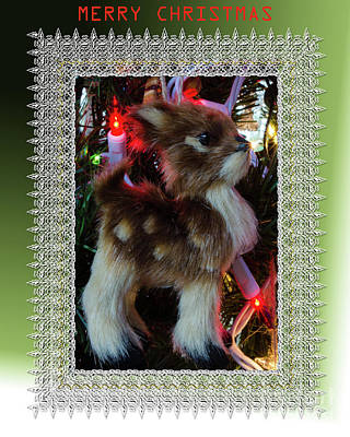 Photograph - Ruddy The White Nose Raindeer by Donna Brown