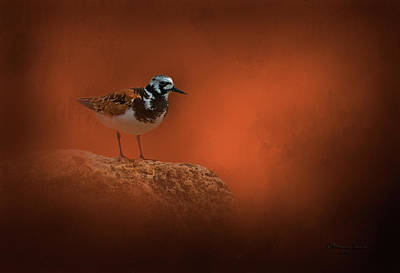 Waterbirds Photograph - Ruddy Turnstone by Marvin Spates