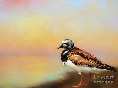 Digital Art - Ruddy Turnstone by Suzanne Handel