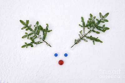 Red Nose Photograph - Rudolf by Tim Gainey