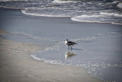Ocean Photograph - Ruffled Feathers by Michael Colgate