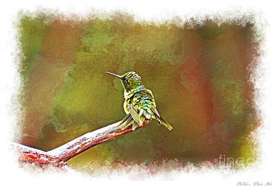 Photograph - Ruffled Hummingbird 2 by Debbie Portwood